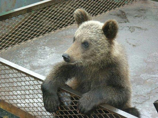 Sobetsu-cho, ญี่ปุ่น: 昭和新山熊牧場