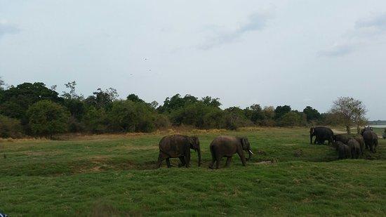 Habarana, Sri Lanka: 20160720_162758_large.jpg