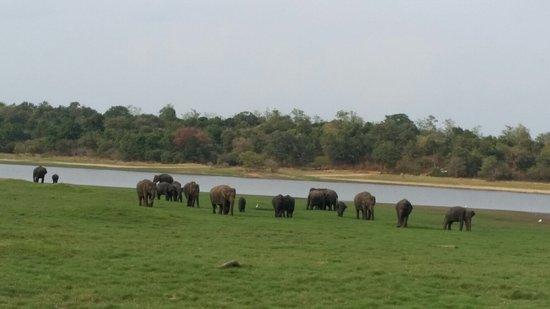 Habarana, Sri Lanka: 20160720_161223_large.jpg