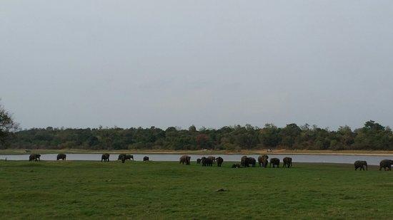 Habarana, Sri Lanka: 20160720_160947_large.jpg