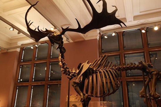 Kelvingrove Art Gallery and Museum: Kelvingrove Art Gallery & Museum, Glasgow..
