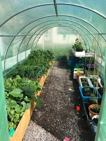 Taynuilt, UK: Polytunnel