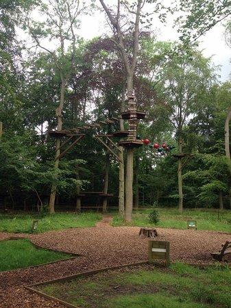 Northampton, UK: Tree ninja