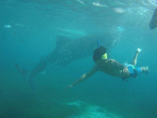 Oslob, Filipinas: swim with whale sharks