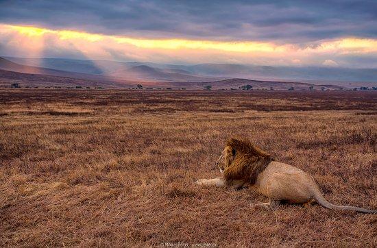 Arusha Region, Tanzania: Landscape at Ngorongoro Crate