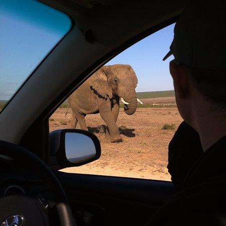 Addo Elephant National Park, Sudáfrica: Elephant!