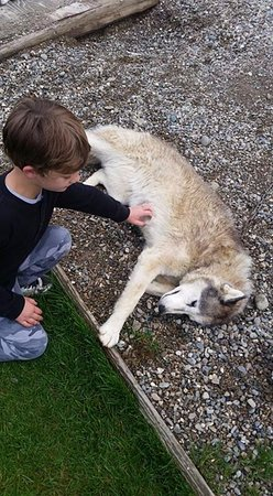 EarthSong Lodge - Denali's Natural Retreat: Our son loved the sled dogs!