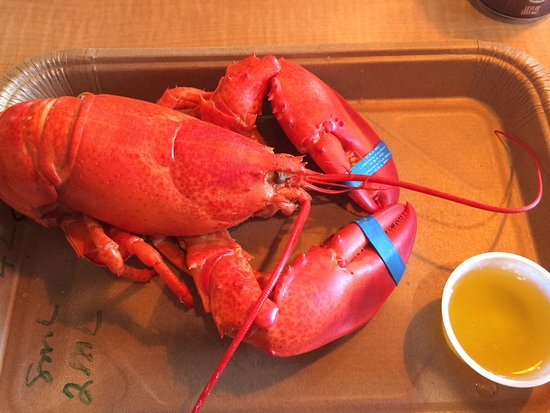 South Freeport, ME: Great Lobster in Freeport