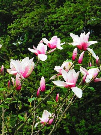 Перт, UK: Blumen