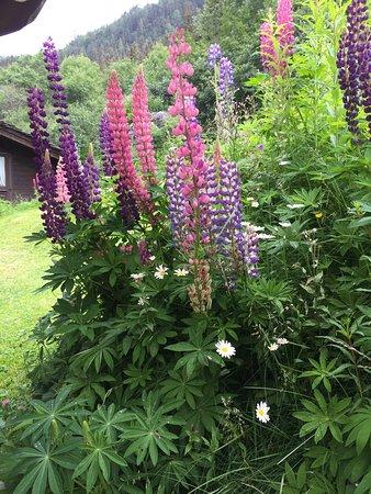 Jardin fleuri près des tables de la terrasse - Photo de ...