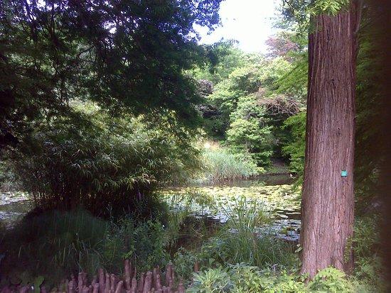 Botanical Gardens of Strasbourg University照片