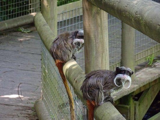 Trinity, UK: tamerins