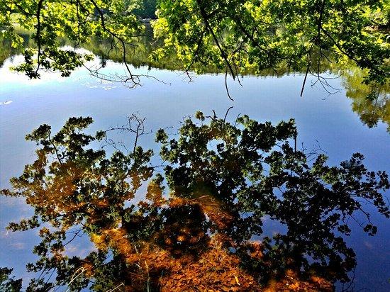 แอเมิร์สต์, แมสซาชูเซตส์: Puffer's Pond