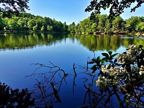 麻薩諸塞州Amherst: Puffer's Pond