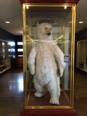 Bundaberg, Αυστραλία: Bundy Bear