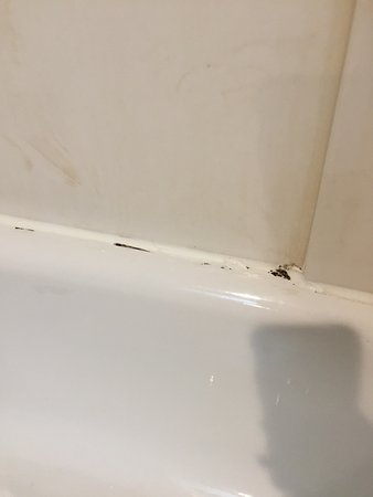 Greeneville, TN: Run down rooms. Shower is nasty!! Little bugs flying around my room.