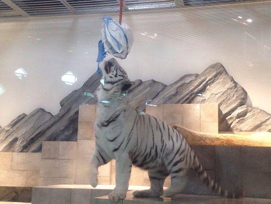 Suita, Japan: 生きているミュージアム ニフレル