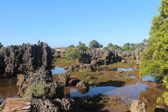 Wasini Island, Kenya: Coral Garden