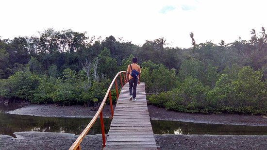 Pulau Lembeh, Indonesia: Foto 6