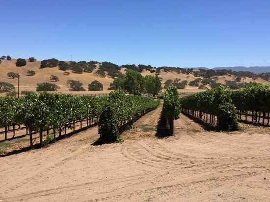 Santa Barbara Wine Country Cycling Tours - Day Tours: photo5.jpg