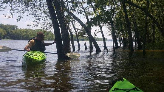 Wabasha, MN: Flooded forrest