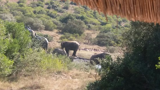 Amakhala Game Reserve, África do Sul: 20160714_121418_large.jpg