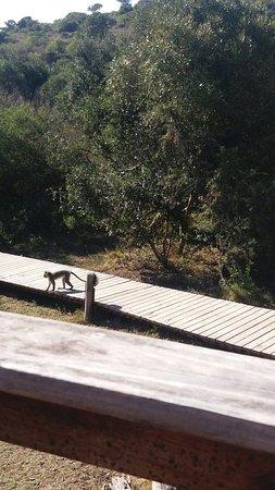 Amakhala Game Reserve, Sudáfrica: 20160713_114902_large.jpg