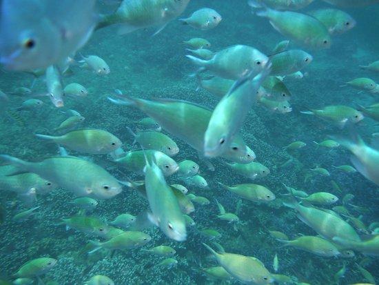 Cordova, Filipinas: Gilutongan Island