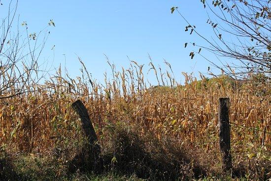 Coal Valley, Ιλινόις: Field
