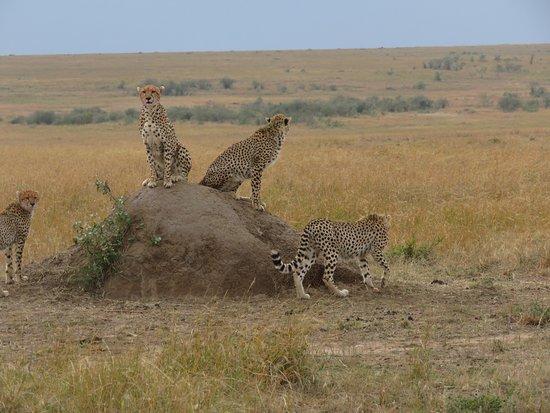 Mara Ngenche Safari Camp: Super verblijf in Mara Ngenche
