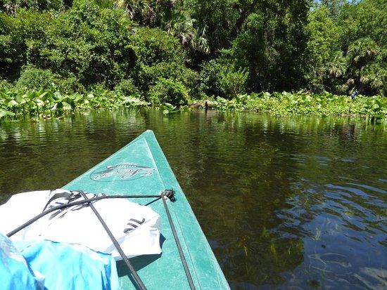 Wekiwa Springs State Park: Wekiwa River