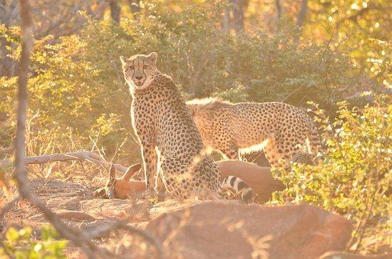 Заповедник Велгевонден, Южная Африка: You have interrupted my meal!