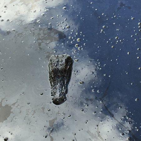 Marrero, Луизиана: photo5.jpg
