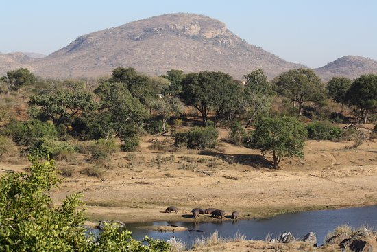 Malelane, Sydafrika: The view from the veranda of the hippos emerging