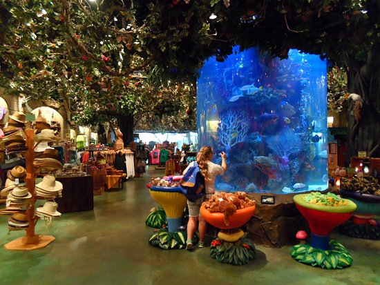 Rainforest Cafe Animal Kingdom Reviews