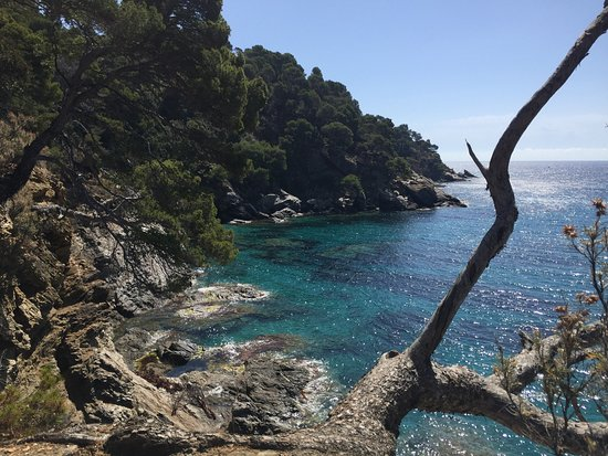 Le Rayol-Canadel, France: Magnifique visite ce matin.  Décors de rêves (au pluriel), la mer comme elle serait si il n'y av