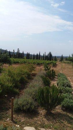 Cantallops, إسبانيا: The grounds