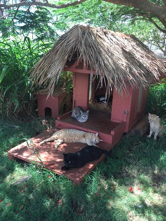 Lanai City, Hawái: If you love or even just like cats- this is a great stop on Lanai. Very warm, welcoming staff. F