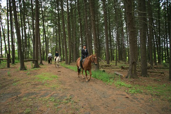 Basking Ridge, NJ: Horseback Riding
