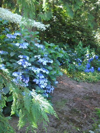 Abbotsford, Kanada: Lovely blooming bushes to see.