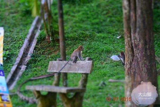 Bukit Mertajam Recreational Forest: the smartest