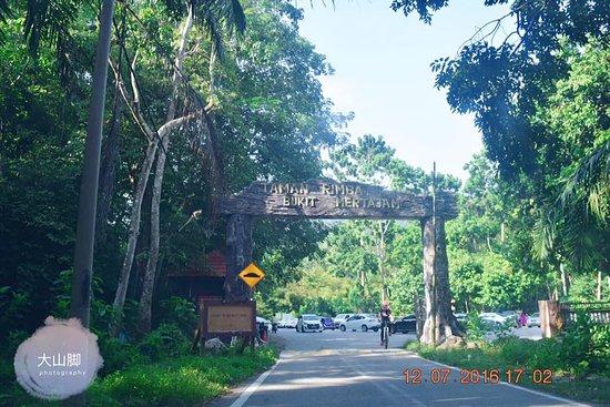 Bukit Mertajam Recreational Forest: nature view