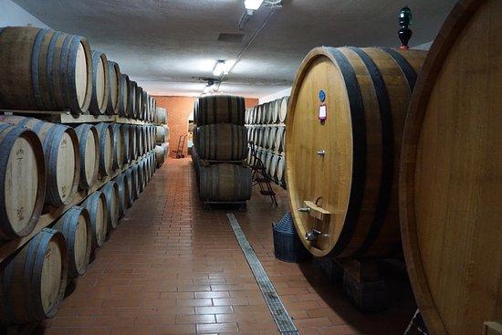 Petrignano, Italien: Winery - Cantina Fanini