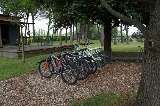 Petrignano, Italien: Bikes for roaming. We did see a bike route sign nearby. The roads have no shoulder.