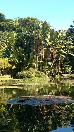 Theatro Municipal do Rio de Janeiro : Lago Frei Leandro - Jardim Botânico/RJ