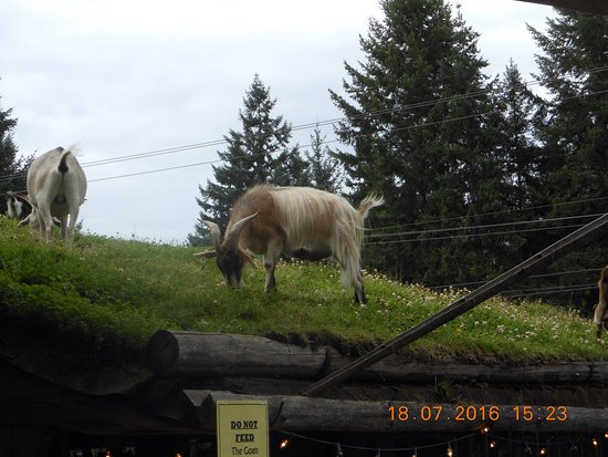 Coombs, Kanada: Goats on Roof Old Country Market