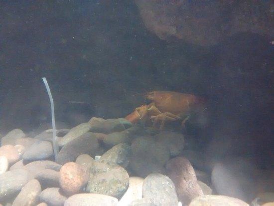 Saint Andrews, Canada: Lobster!