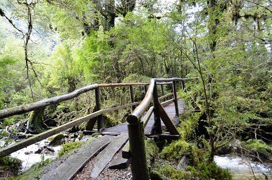 Puyuhuapi, Chile: Bosque encantado, camino a las termas.