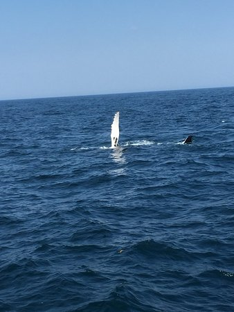 7 Seas Whale Watch: photo1.jpg