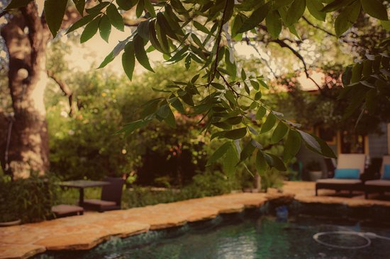 Park Lane Guest House: Swimming and lounging in the courtyard. The outdoor shower is divine!